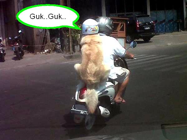 Anjing Pakai Helm 1