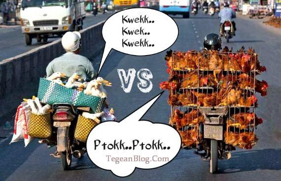 Perbedaan motor bebek dan motor ayam jago